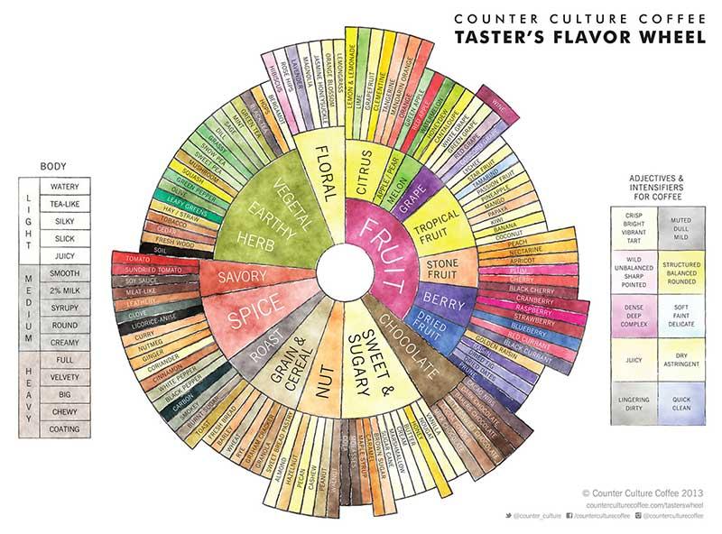 Counter Coffee Flavor Wheel